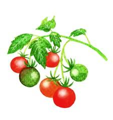 Veg tomato